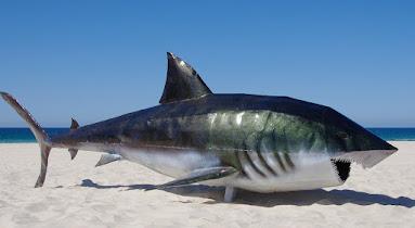 Melindungi Ikan Hiu dan Pari Untuk Menjaga Kesehatan Laut