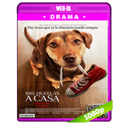 Mis huellas a casa (2019) WEB-DL 1080p Audio Dual Latino-Ingles