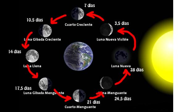 Mi clase de 4 b las fases lunares Cuando hay luna creciente