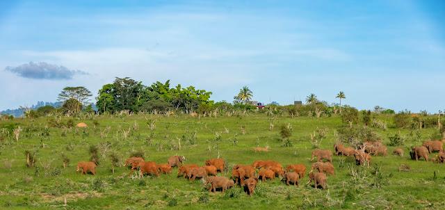 elefanten, Afrika, Kenia, Tsavo, Wildlife Fotografie, Daniela Skrzypczak, Safari