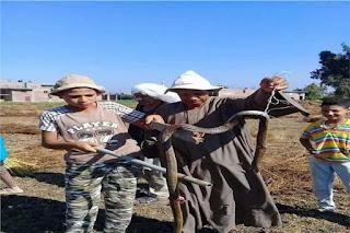انتشار الثعابين والعقارب السامة فى مركز المحمودية بمحافظة البحيرة