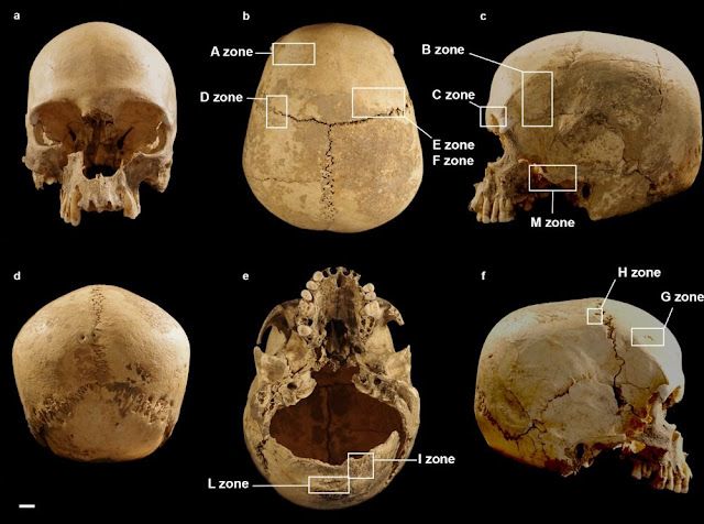 Journey of a skull: How a single human cranium wound up alone in a cave in Italy