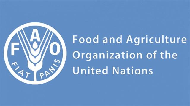Internship Program at FAO