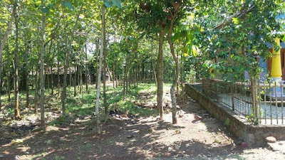 Tanah Dijual Blimbing, Sambirejo, Sragen