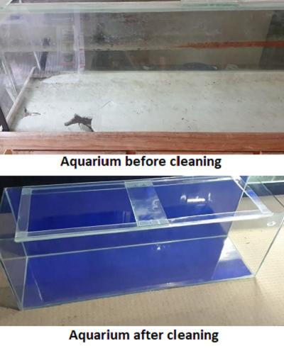 How to clean used aquarium