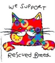 Please consider adopting a shelter cat and saving a life!