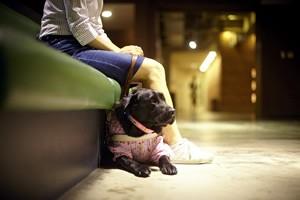 sala de espera para cães