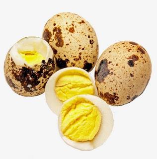 Mengetahui Manpaat Pemberian Telur Puyuh Untuk Ciblek Yang Sudah Terbukti Khasiatnya