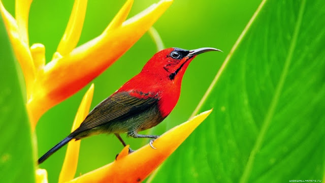 Read Lovely Bird HD Wallpapers, free download bird wallpaper, hd birds wallpapers for desktop, download hd wallpapers for pc,