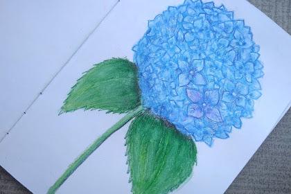 Menggambar Bunga Hydrangea