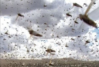 Locust-control-update