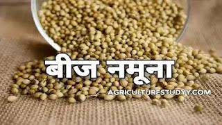 बीज नमूना क्या होता है एवं बीज का नमूना लेने की कोन कोन सी विधियां होती है, seed sample in hindi, seed sampling in hindi, seed in hindi, seed