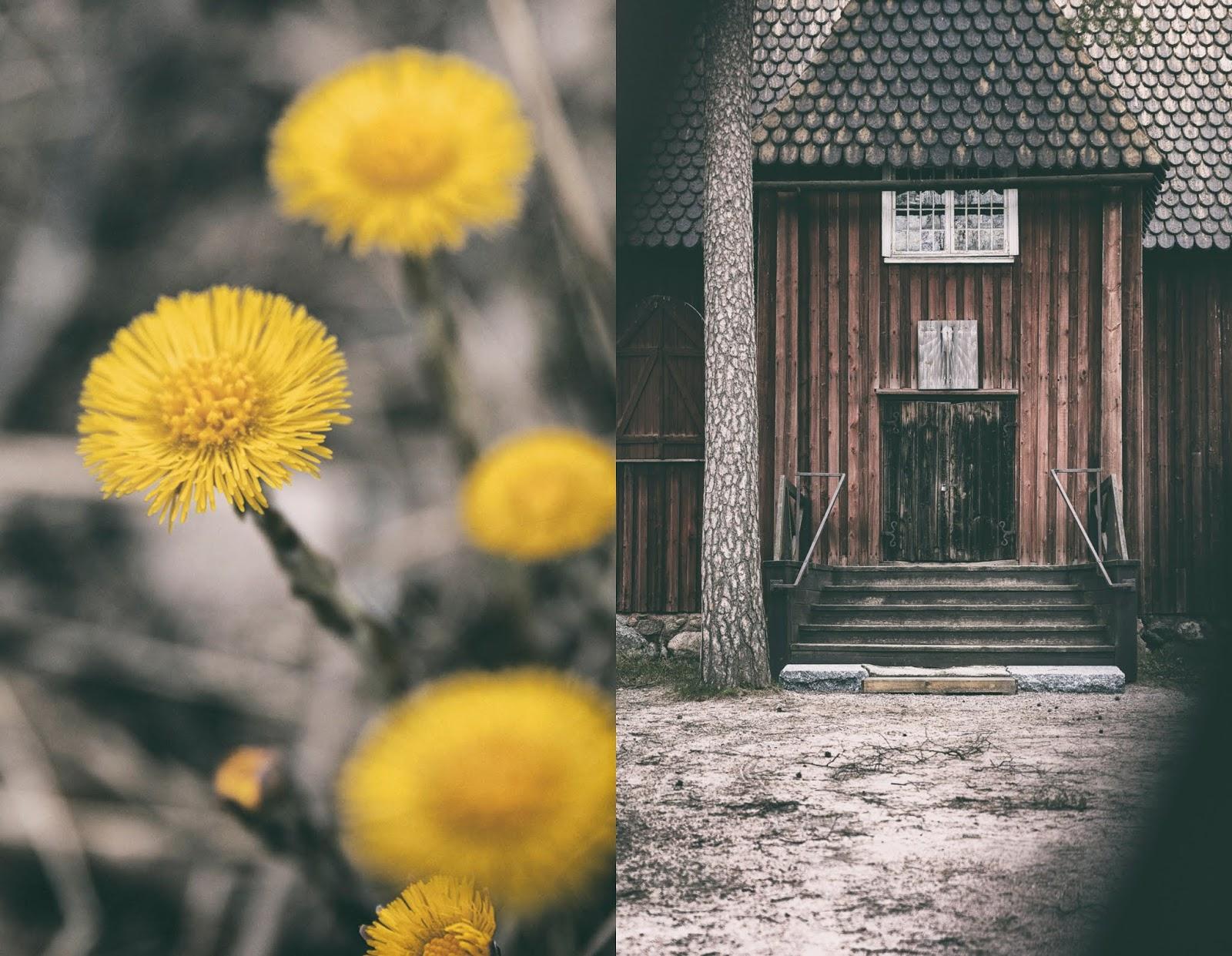 Helsinki, visithelsinki, Seurasaari, Fölisön, Myhelsinki, experience, Suomi, Finland, luonto, nature, outdoors, luontovalokuva, valokuvaus, valokuvaaminen, valokuvaaja, Frida Steiner, Visualaddict, visualaddictfrida, visitFinland, travel, matkailu, matkustus