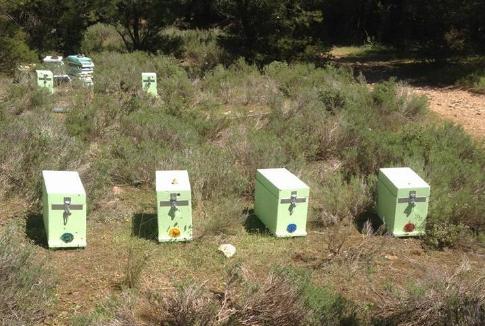 Προσοχή μελισσοκόμοι: Κλοπή μελισσιών στην Κηφισιά της Αθήνας