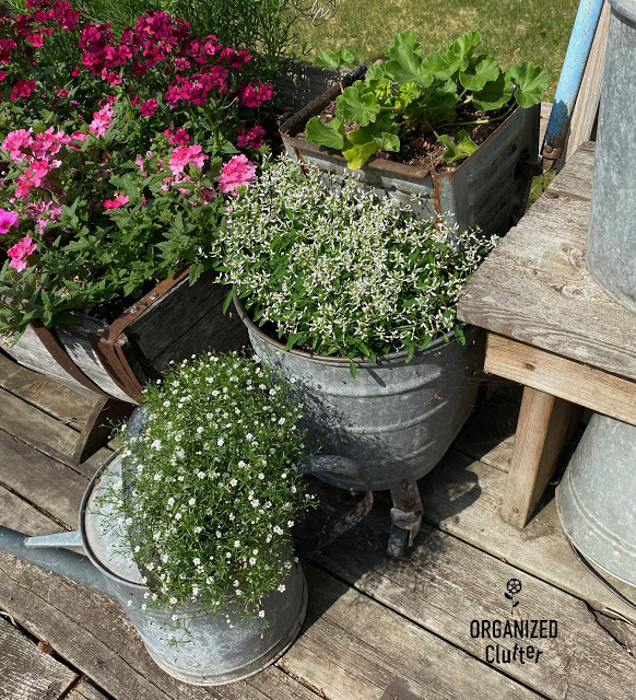 Photo of a watering can with baby's breath & a scrub bucket with Diamond Frost Euphorbia & a Geranium