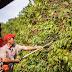 Expocafé apresenta novidades que vão além da lavoura