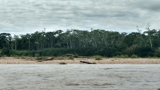 the forest on the banks of the Tombopato River