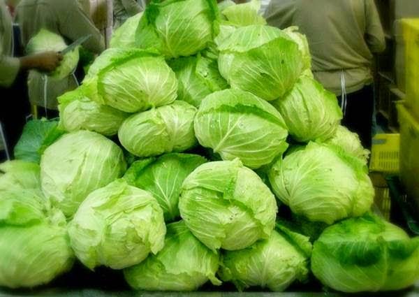 Kubis atau kol merupakan salah satu jenis sayuran yang mempunyai banyak manfaat bagi keseh 12 Manfaat Kubis (Kol) untuk Kesehatan dan Kecantikan