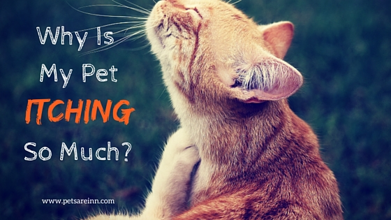 Pet Itchiness