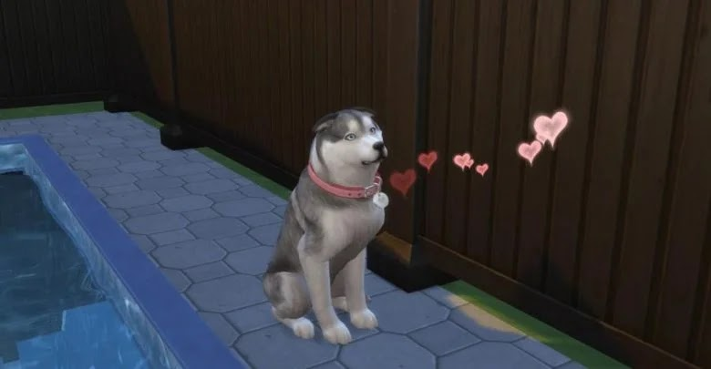 The Sims 4: my cats and dogs do not enter the house