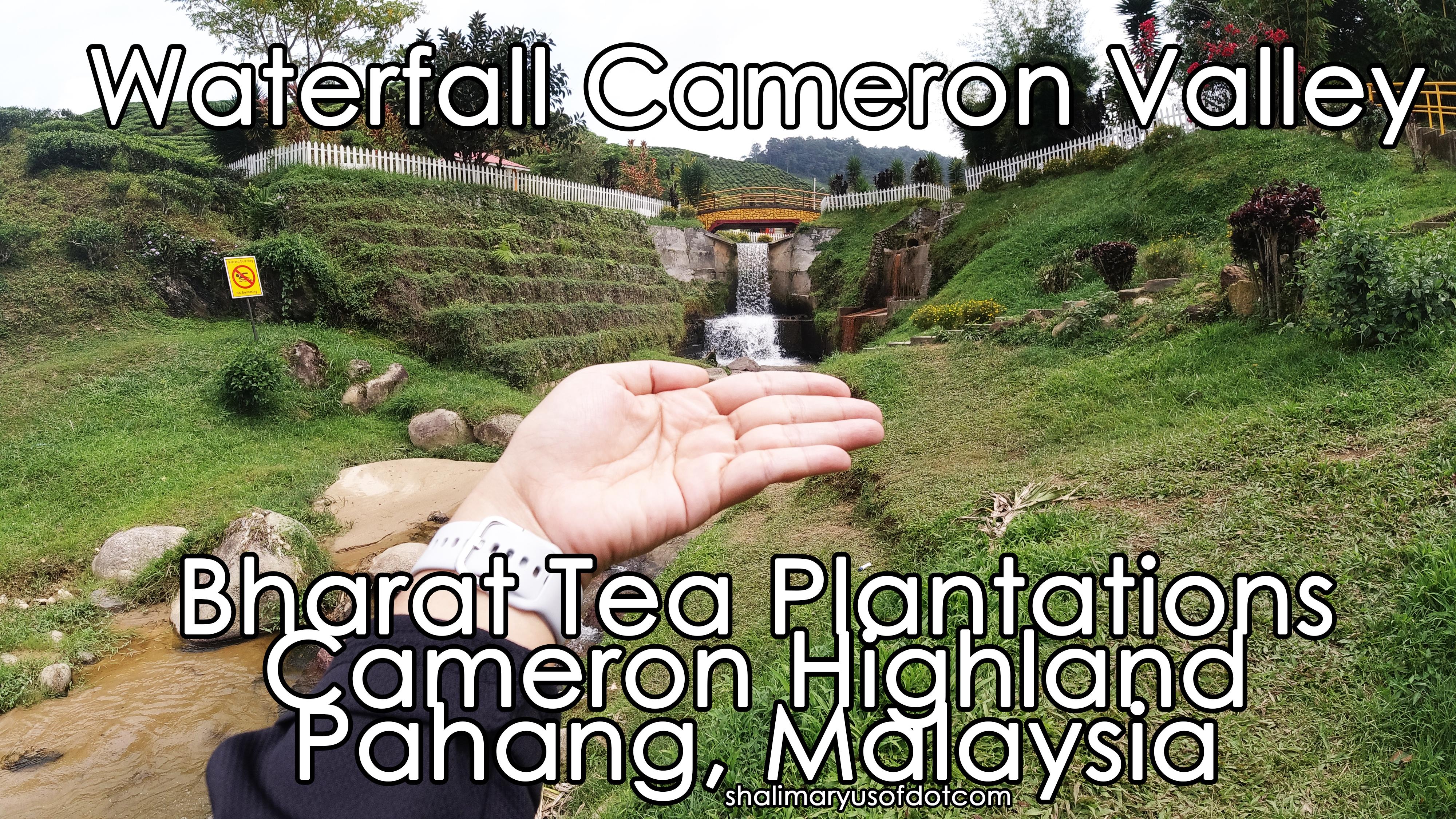 bharat tea