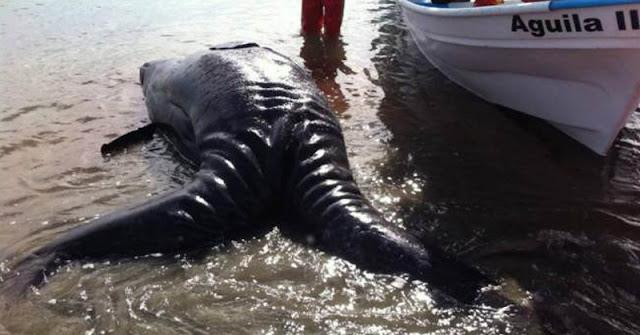 Τρομακτικό εξωγήινο πλάσμα με 2 ουρές ξεβράστηκε στις ακτές του Μεξικού μετά τον δολοφονικό σεισμό. Σοκαρισμένοι οι επιστήμονες!