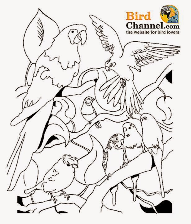 pet bird coloring pages - pet coloring pages for kids