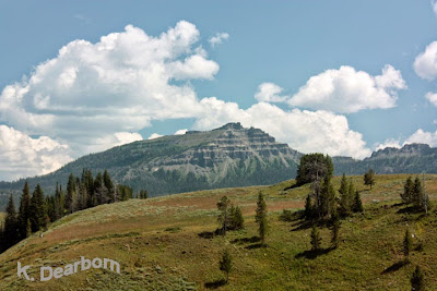 http://theearthminute.blogspot.com/2014/11/discover-mountain-wildflowers-in-wyoming.html