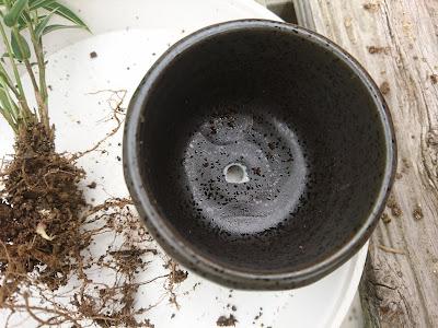 ミニ盆栽の鉢