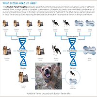 Wisdom Panel Dog DNA Test Review