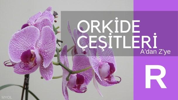 Orkide çeşitleri R harfi