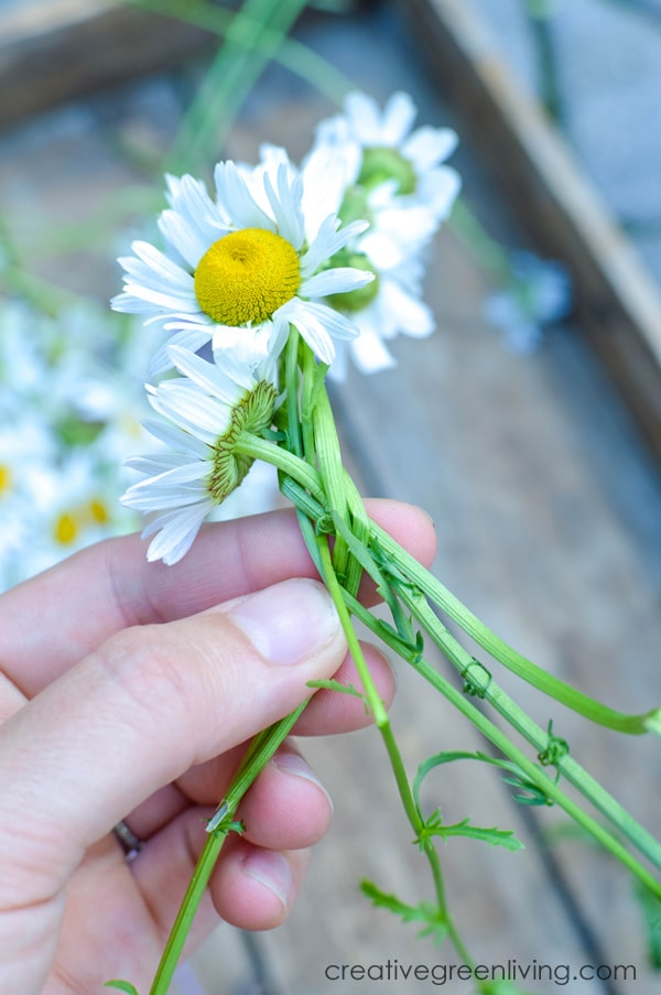 braided daisy chain flower crown