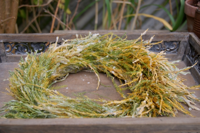 DIY Gewachster Asparaguskranz