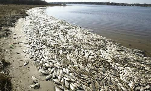 Cause(s) Of Dead Fishes Along The Shorelines Of Bayelsa, Delta And Rivers States Under Investigation — NOSDRA