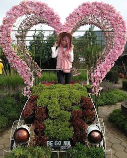 Rute Dan Lokasi Kebun Bunga Begonia Lembang, Taman Romantis Di Bandung