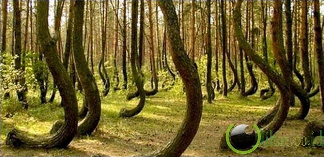 Hutan bengkok