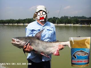 Umpan Ikan Patin Khusus Galatama