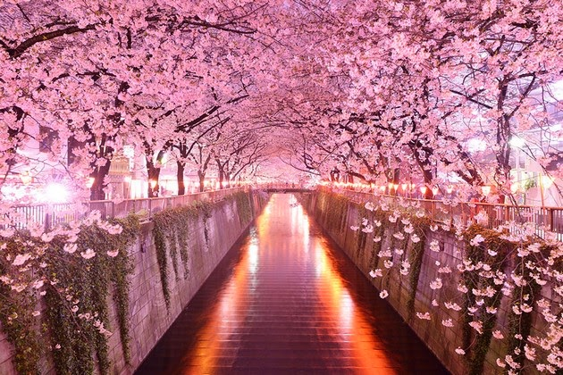 Sakura Tunnel, Japan