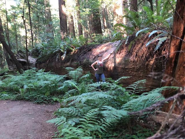 woman next to large fallen redwood tree
