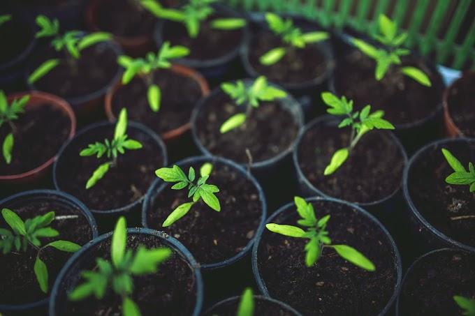 Laporan Praktikum Biologi dan Kesehatan Tanah (Acara II)
