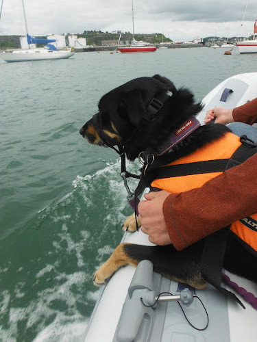 black dog in lifejacket hanging over edge of dinghy moving through water