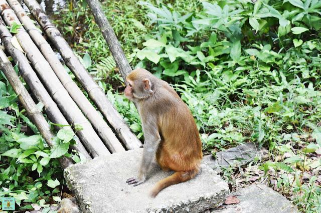 Macaco en Phong Nha Ke Bang, Vietnam