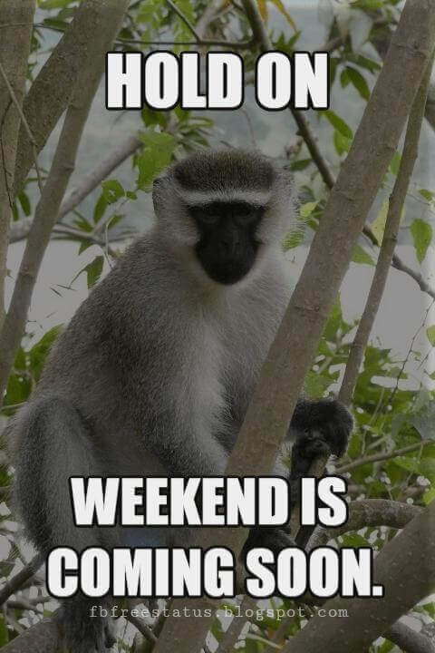 Funny Weekend Quotes Images, Hold On Weekend Is Coming Soon.