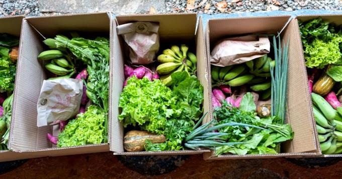 Projeto atende 56 famílias com cesta de alimentos orgânicos