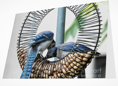This is a screen shot of a card which I'm selling on Fine Art America. It features a couple of blue jays at a wreath shaped bird feeder filled with peanuts in the shell. Info re this card is @ https://fineartamerica.com/featured/blue-jays-wooing-1-patricia-youngquist.html?product=greeting-card