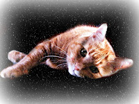 Cat lying against a dark background with snowflakes falling