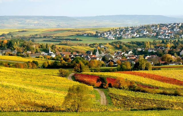 Weinlagen rund um Rümmelsheim - Burg Layen