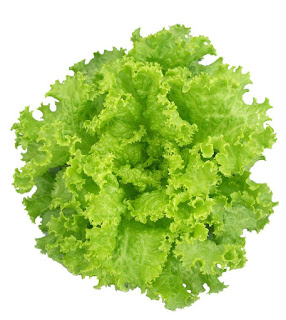 Leaf Lettuce Benefits For Body Health