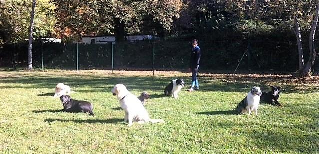 eduquer chien annecy talloires ugine thones