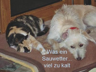 http://www.barfen-hunde.eu/BARF-Futteranalyse/